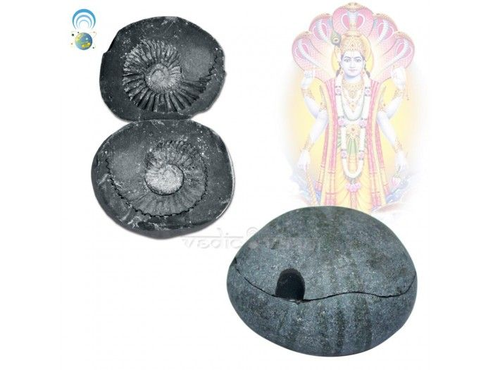 Chakra Dhari Vishnu Laxmi Shaligram is Considered highly auspicious to give the blessings allround protection of Lord Vishnu. One who sees the Mahavishnu Shaligram gets eternal peace. http://vedicvaani.com/index.php?_route_=Chakradhari-Vishnu-Laxmi-Shaligram . Saligramas are basically described as fossil-stones and characterized by the presence of discus marks. The saligrama-stones (black stones in which fossil ammonites are embedded) are the most celebrated universally.