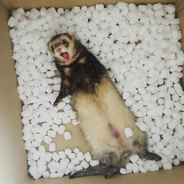 Ferret Safe Cat Food