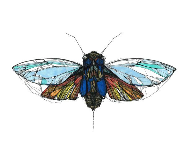 cicada tattoo | Found on behance.net