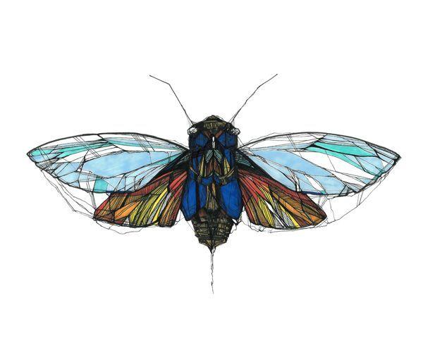cicada tattoo | Found on behance.net