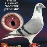 "160 - B16-6206657 ""DOCHTER JERONIMO"" ♀   De Duif"