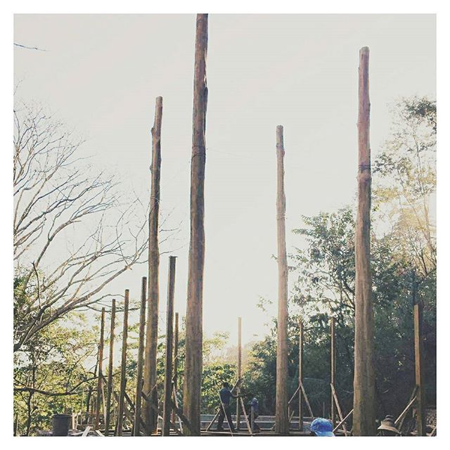 v e r t i c a l :: working on this project with renowned architects @olsonkundig // #construction #sitevisit #architecture #landscapearchitecture #building #treehouse #designstudio #timber #costarica 📷@flynnstagram2000