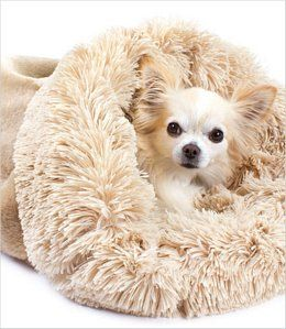 Cuddle cups are perfect for the little dog who likes to burrow in the covers. Available at The Dog House