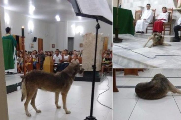 """Un cura quiere sacrificar a un perro que acude a misa por """"maloliente"""""""