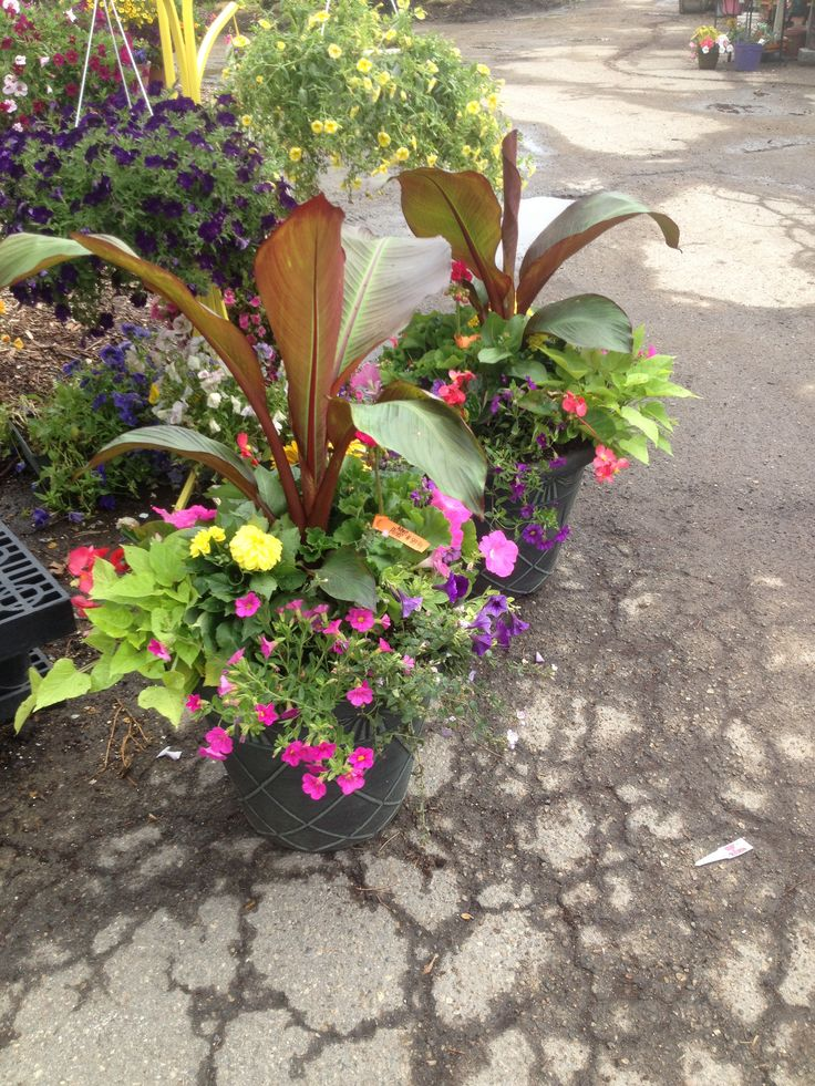 Tropical Outdoor Annual Planters  Planted By Ashley Thomas