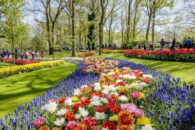 Diseño holandés en flores en la inauguración de Keukenhof     LISSE Países Bajos Marzo 2017 /PRNewswire/ - Nuevo edificio de entrada a Keukenhof en uso La 68 edición de Keukenhof ha comenzado. La apertura oficial se dedicó al Diseño Holandés y el nuevo edificio de entrada. Más de 100 variedades de tulipán ya están en floración en el parque. En Keukenhof la primavera ha comenzado de verdad. Keukenhof es el lugar para disfrutar de millones de tulipanes en flor narcisos y otras flores de bulbo…