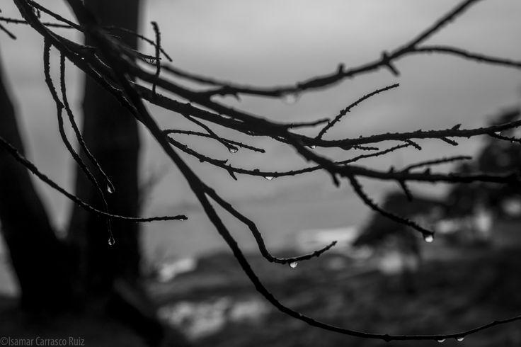 .Fotografía formato digital, blanco y negro. Después de la lluvia. Lugar: Quintero, V región, valparaiso, Chile.