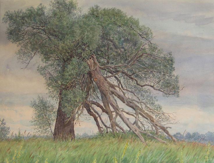 Людмила Томашевская - акварель. Погибшее дерево.
