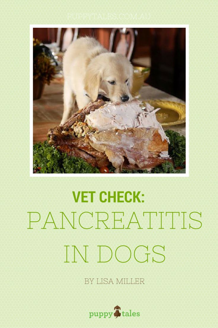 Homemade Food For Dog With Pancreatitis