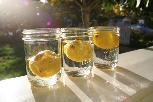 Lemon Photography Shoot #Lemons #Photography #Design