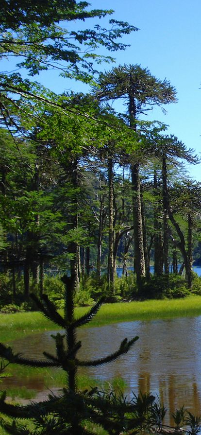 Lake Toro at Huerquehue National Park in the Chilian Andes • photo: El Montero on Flickr