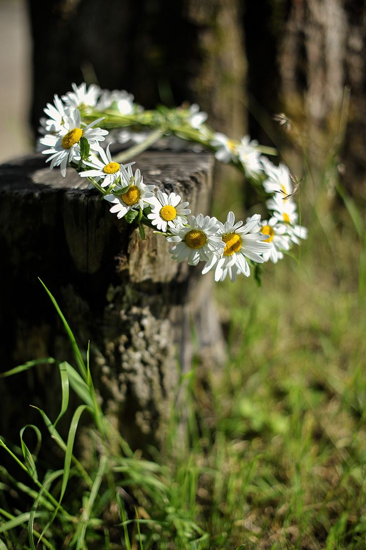 Daisy wreath, Country Lifestyle. Beauty details. www.albertalagrup.com