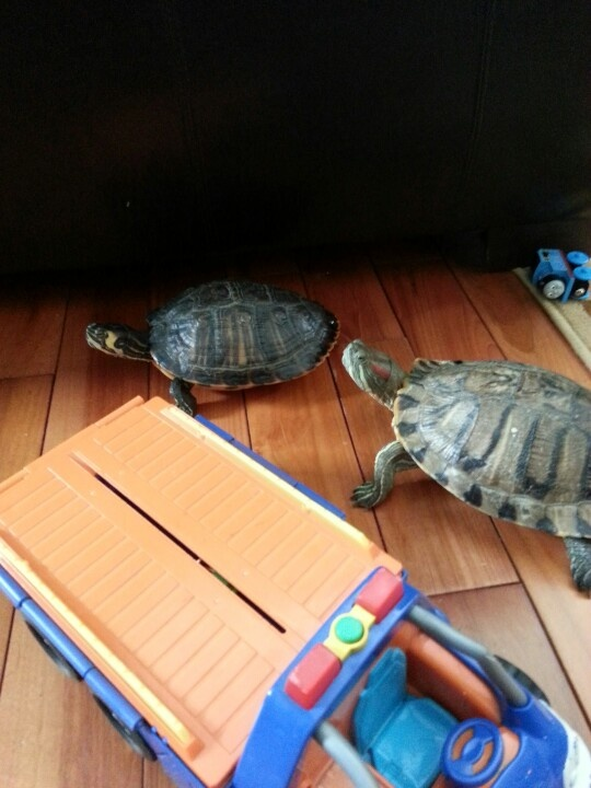 Bella and mrs turtle