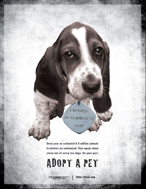 Mn Dog Rescue Organizations