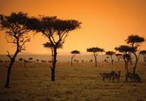 African SavannahAfrican Savanna, Bucketlist, Buckets Lists, Dreams, African Safari, South Africa, Kenya, Places, Travel