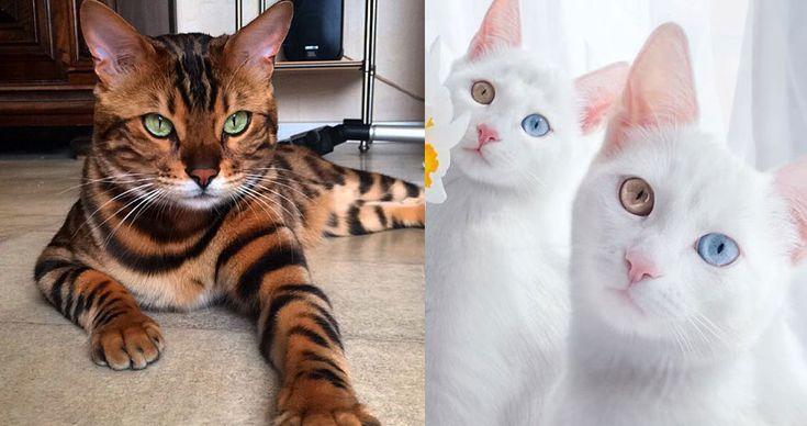 28 από τις πιο όμορφες γάτες του κόσμου. - Τι λες τώρα;