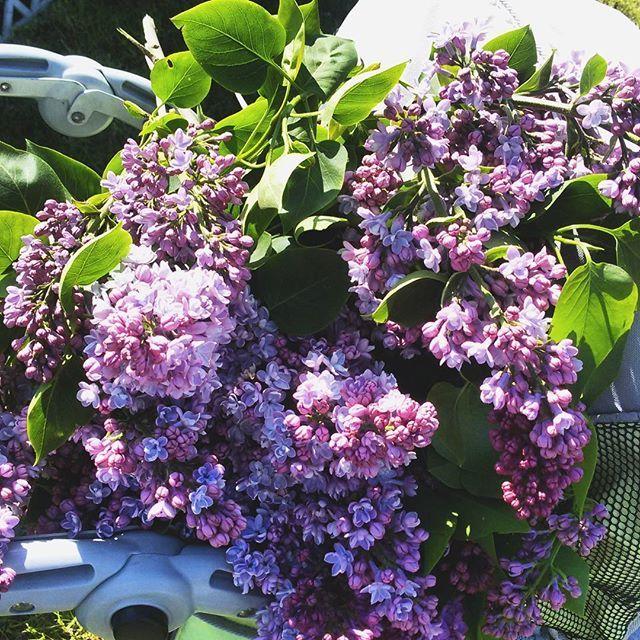 #lilak #bez #fiolet#tv_living #tv_stilllife #liveauthenic #lifestyle #instagirl#simplecity #nature #natural #natura #minimal #minimalism #minimallife#naturelovers #love #vscocam#flowerlover #simpledecor#flowers #garden #spring#lilak#kwiaty#maj#may#tobylmaj #💜#minimal#rustic