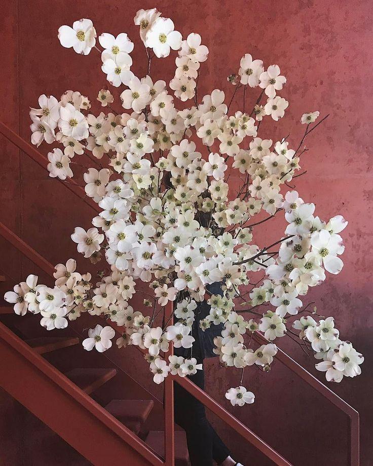 The Lane Ruby Mary Lennox Dogwood Blooms Flower Phone Wallpaper Flowers