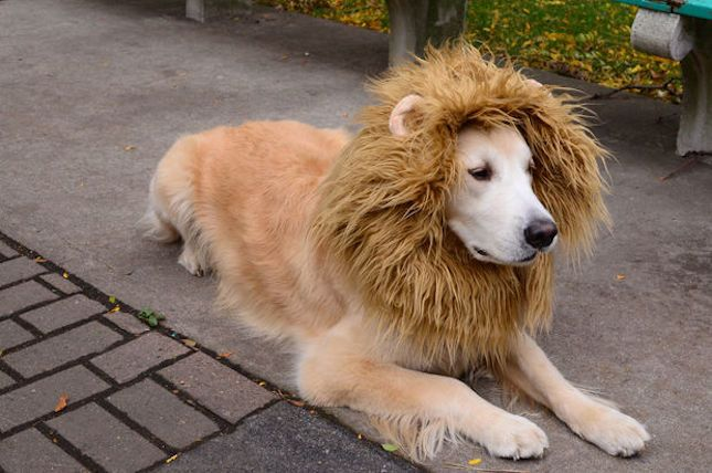 22 Funny Dog Costumes for Halloween via Brit + Co