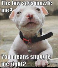 pitbulls are so incredibly precious