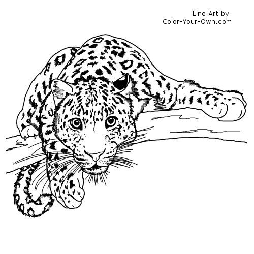 find this pin and more on coloring animals lurking leopard coloring page