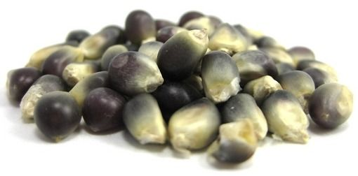 Midnight Blue Popcorn Kernel -- All natural midnight blue popcorn kernels. Pops into a delicious light and fluffy popcorn.