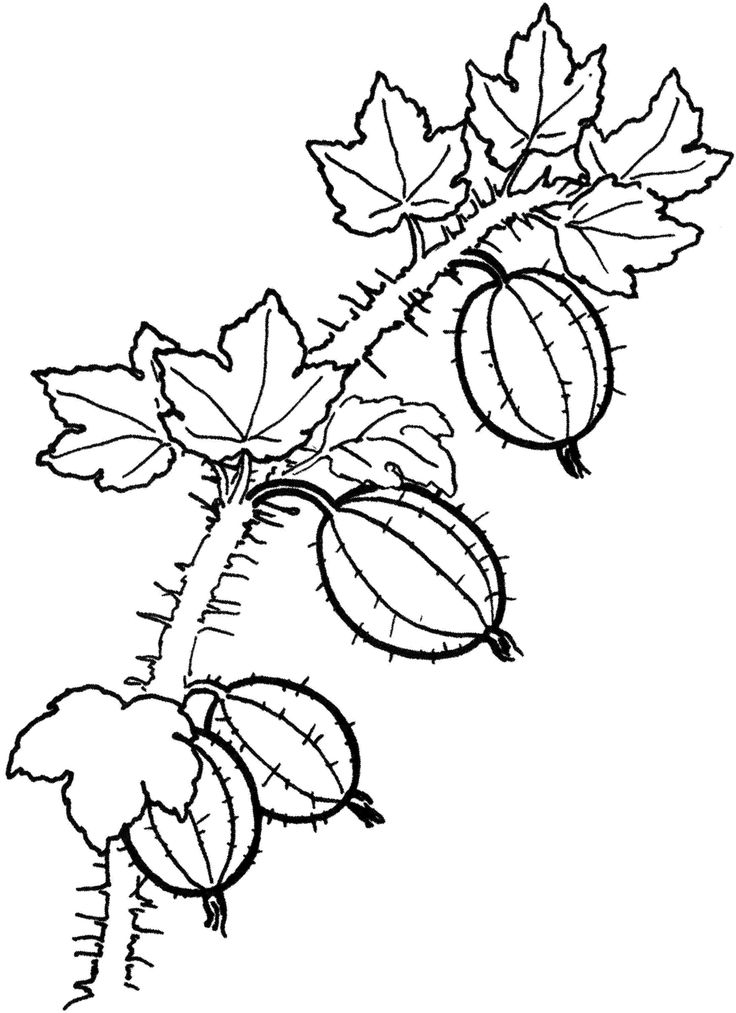 Fruit and berries coloring pages 16