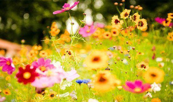 Anthophobia  Fear of flowers