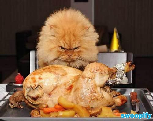 Thanksgiving & I Am Hungry #humor #lol #funny