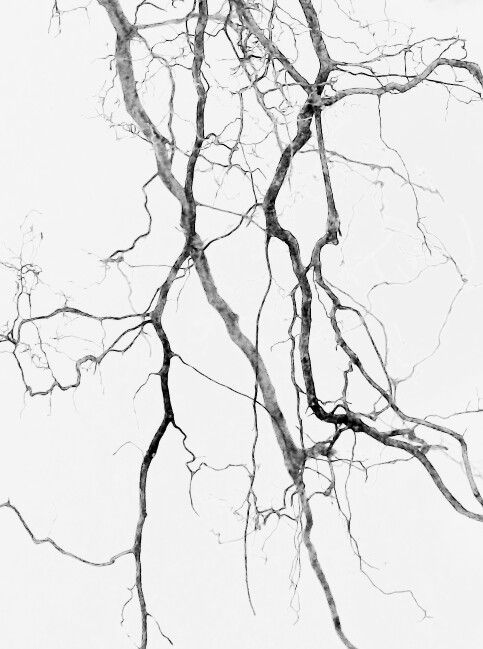Scraggly Tree Branches - intricate grey patterns in nature; organic texture inspiration