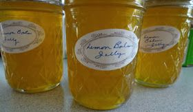 The Herb Gardener: The Many Uses for Lemon Balm