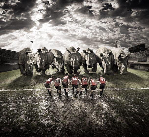 Rugby vs Rhino