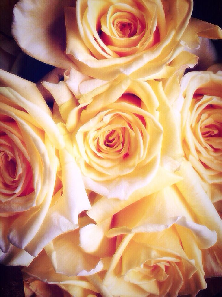 Beautiful bouquet of yellow roses have been sent from my godfather for my mom's birthday!!
