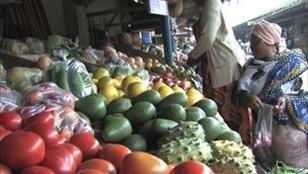 Des filets anti-insectes pour réduire l'usage des pesticides