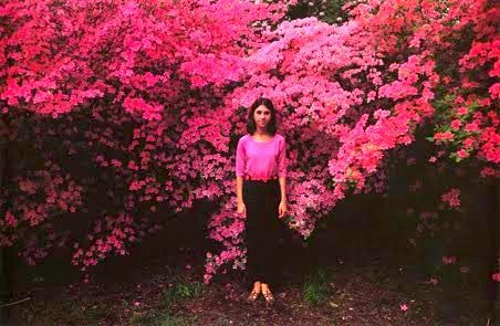 Image from Wild Flowers, photography book by Joel Meyerowitz.