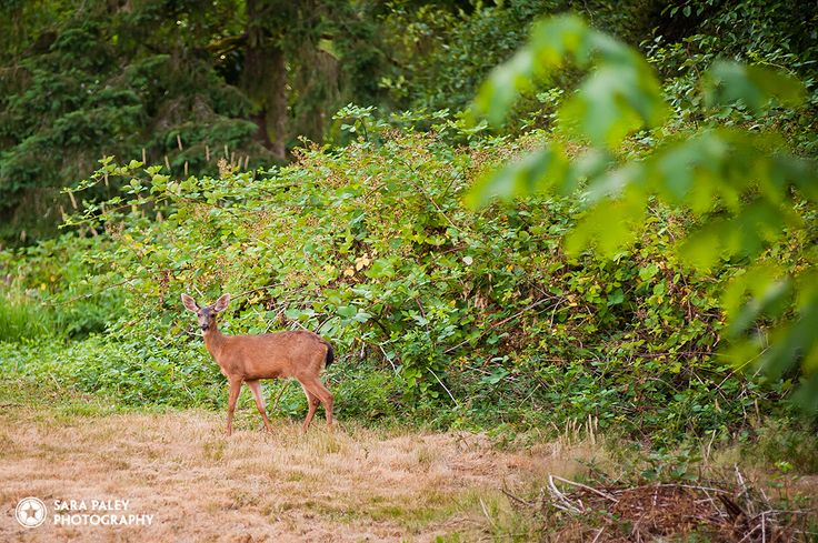 @sarapaleyphoto #paleypix #deer portrait photography, burnaby portrait photographer, sara paley photography, natural light, lifestyle photographer, langley field at sunset, lifestyle portraits, vancouver portrait photography