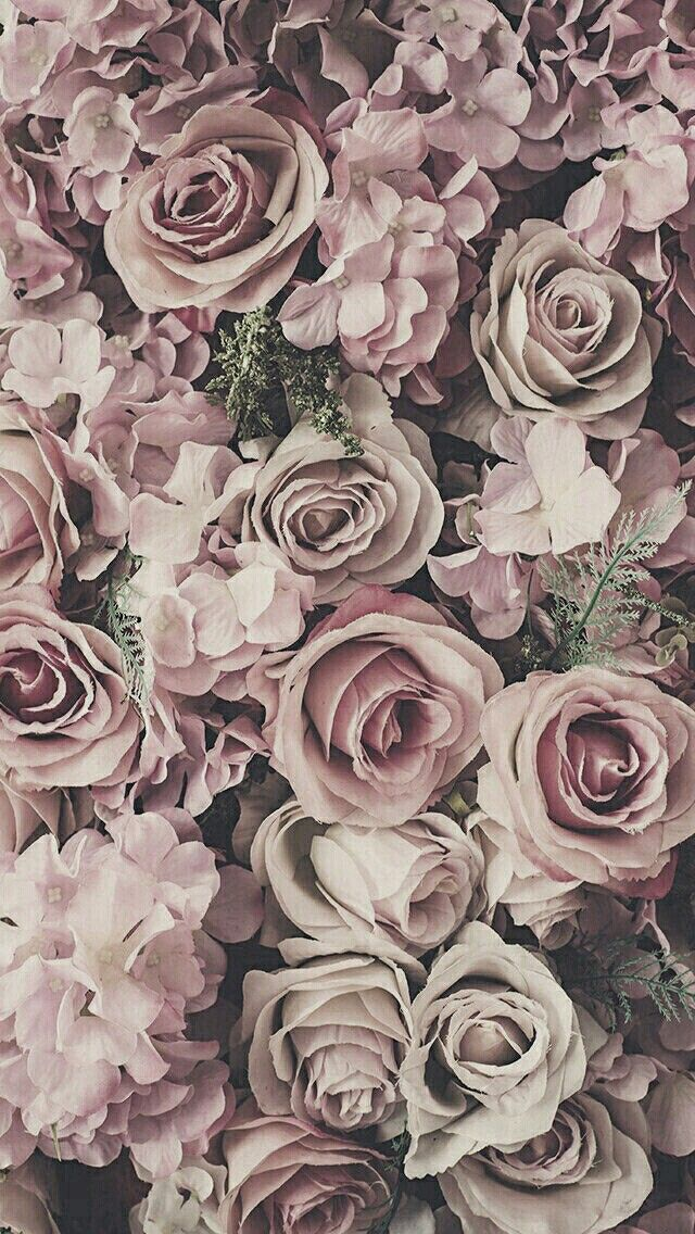 Rose phone background