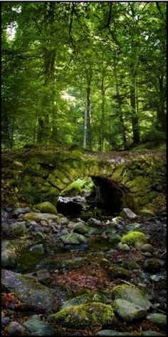 """Fairy Bridge, Reelig Glen, Scotland ~ """"The bridge and grotto in Reelig Glen, near Inverness. The story goes that they were built by the fairies living in the wood, which is why locals call it Fairy Glen rather than Reelig"""""""