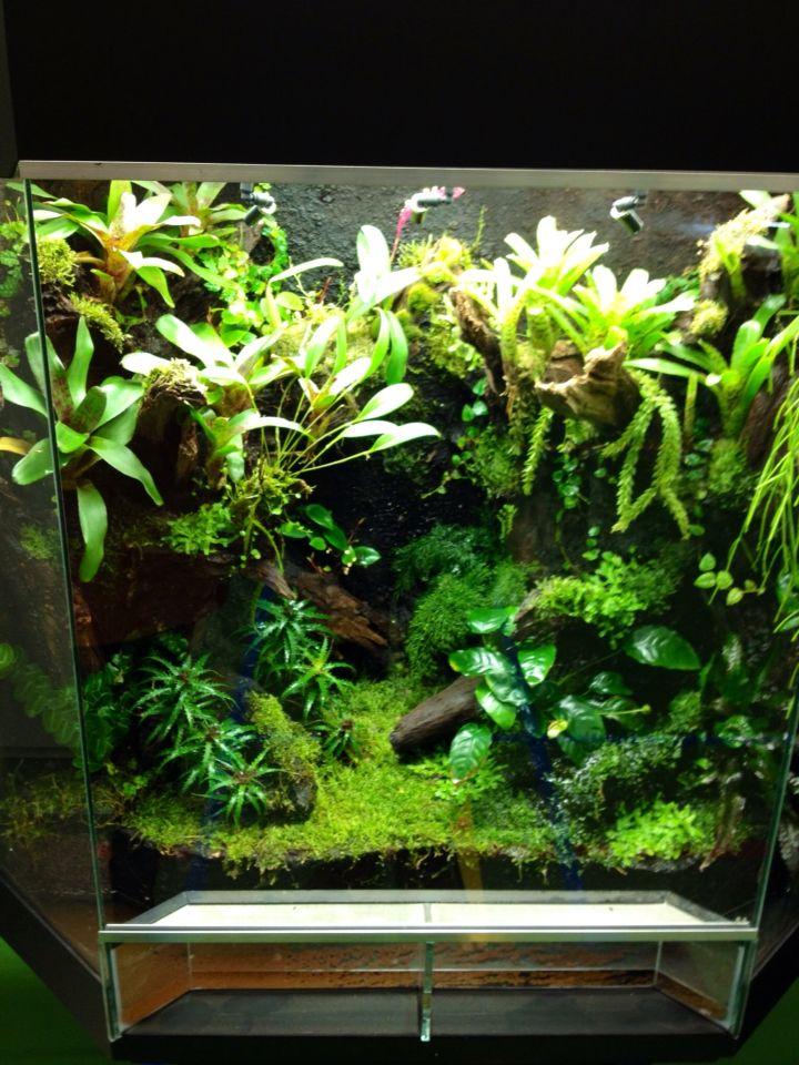 1000 images about vivariums terrariums paludariums