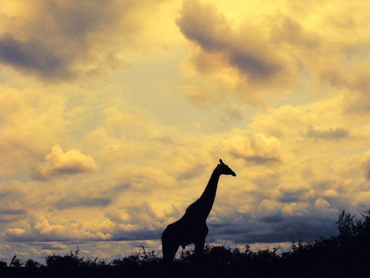 49 besten Light Bilder auf Pinterest | Afrikanische tiere, Planeten ...
