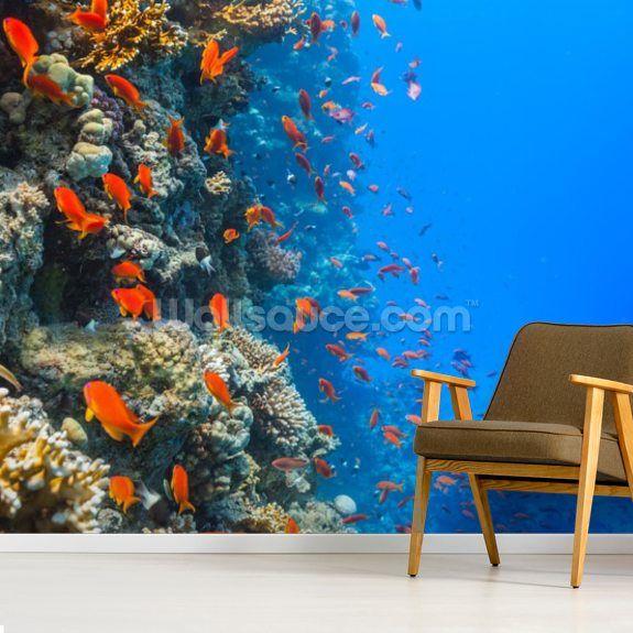 Coral Reef Society Wallpaper Wallsauce Us Fish Wallpaper Coral Reef Wallpaper