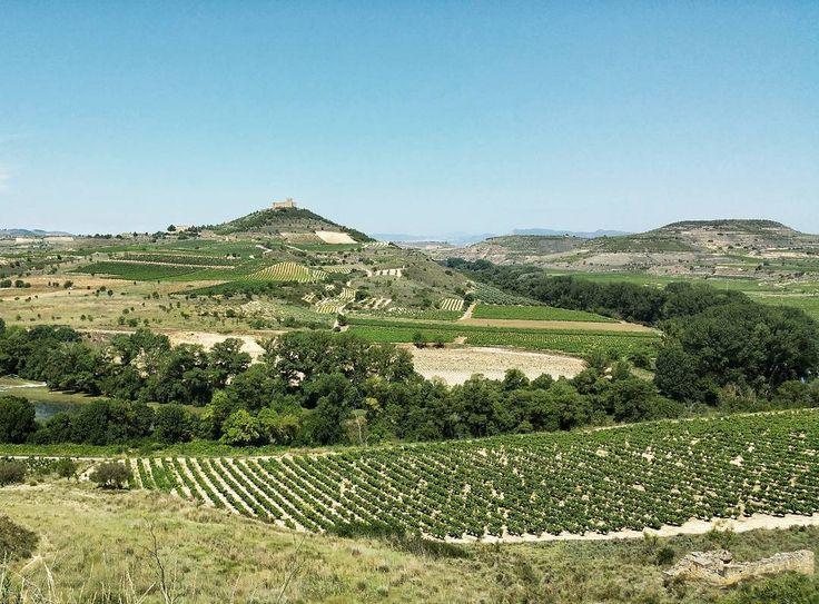 In summer enjoy green landscapes of Rioja... and#Rioja #tourism #winetours #travel #wine #winelover #turismo #enoturismo #experience #winetastelovers #riojawine #gastronomía #visitSpain #vino #viaje #tapas #winetasting #instariojawine #gastronomy #instawinetours #winecountry #wineries #worldplaces #winetrip #winetravel #viajar #grapevines #winetourism #winetourist #lp