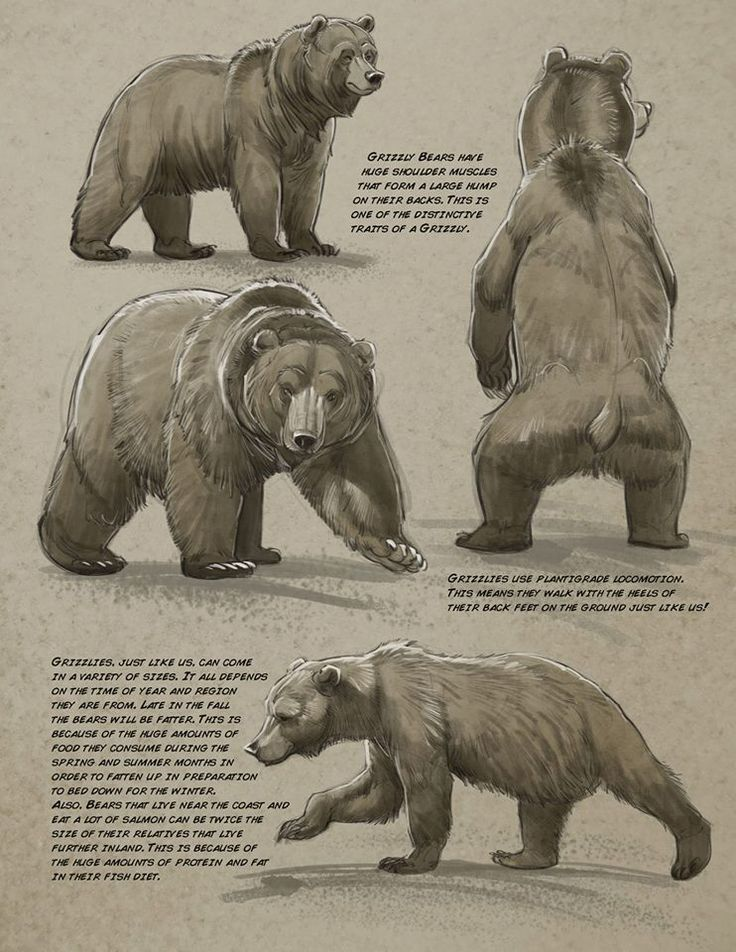 271 best Animals. Tutorials and anatomy images on Pinterest ...