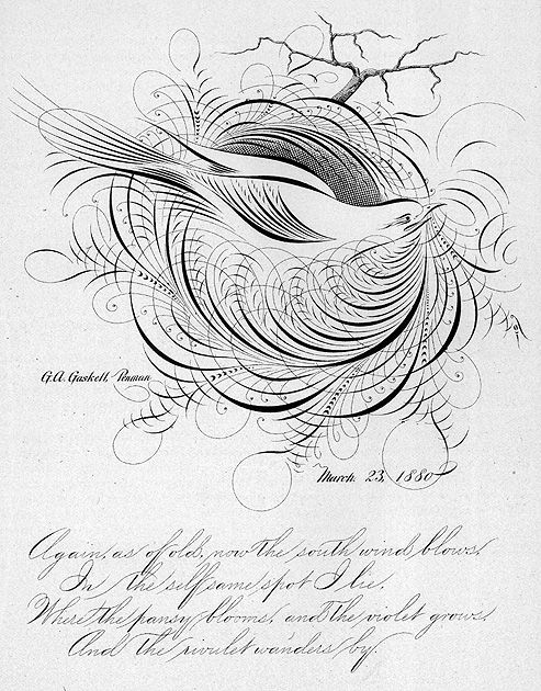 549 Best Calligraphic Drawings Images On Pinterest Hand