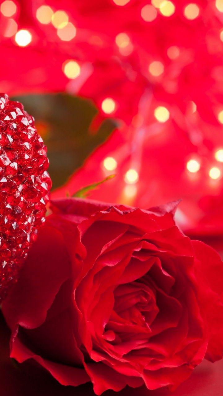 Pin On Hd Flower Wallpapers