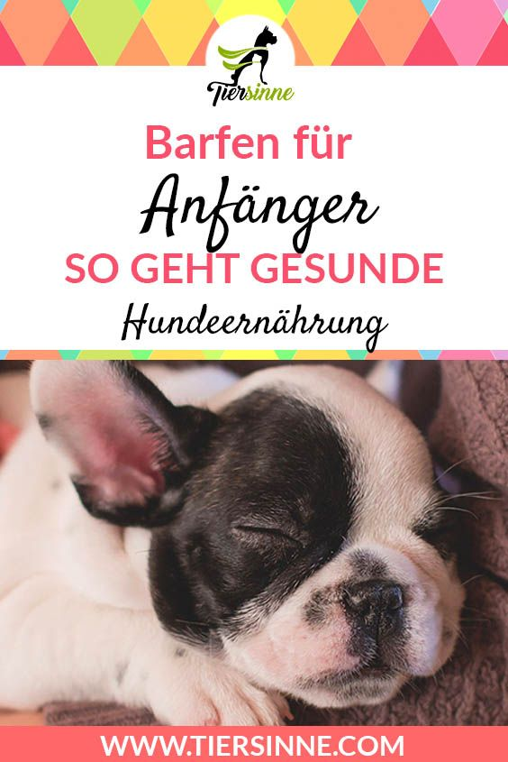 Barfen für Hunde: Step by step instructions ▷ This is how Barfen works!