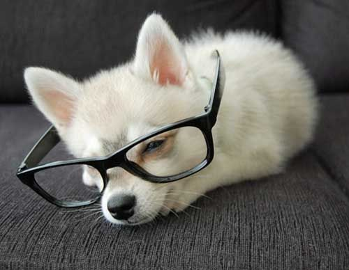 book wormHipster Chic, Cute Puppies, Neutral Milk Hotels, Hipster Dogs, Hipster Puppies, English Teachers, Hipster Glasses, Puppy'S, Kiwi S Hipster Looks