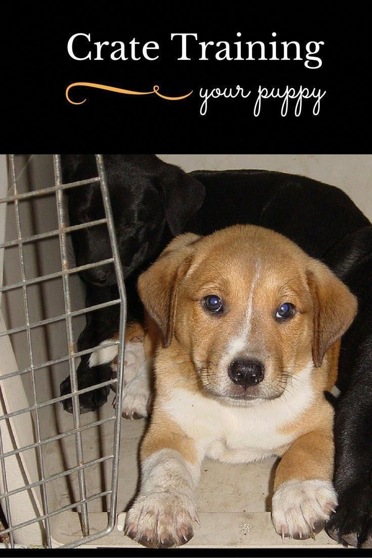 Tips For Crate Training Your New Puppy Dog Vills Training Your