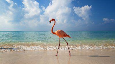 обои картинки фото море, небо, птица, фламинго