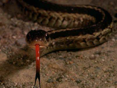 Snake Facts - It Makes 'Sense'